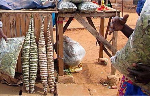 Kenkeliba: The West African Superfood Tea