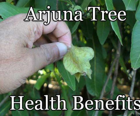 Arjuna Tree Health Benefits Explained