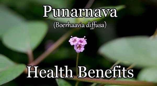 punarnava health benefits