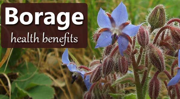 borage seed oil benefits
