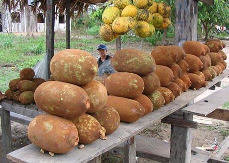 cupuacu for sale in Brazil