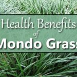 mondo grass health benefits
