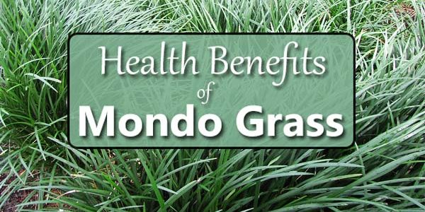 The Many Benefits of Mondo Grass (Ophiopogon)