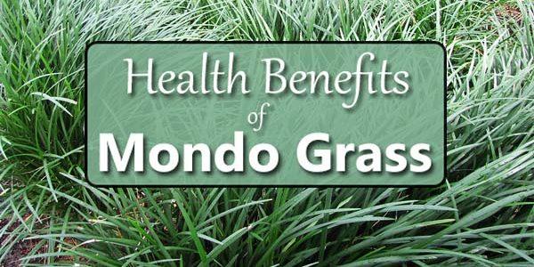 The Many Benefits of Mondo Grass (Ophiopogon)