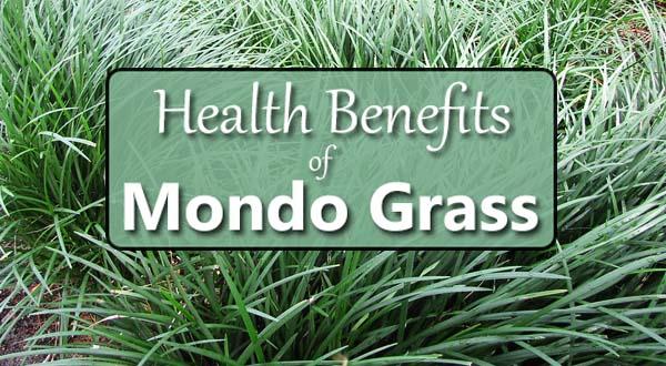 mondo grass health benefits