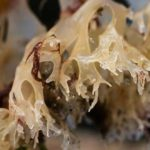 health benefits of Irish sea moss