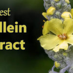 best mullein extract