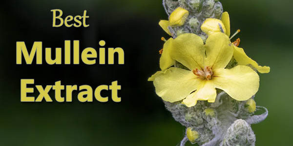 Best Mullein Extract (Plus Tips for Getting the Most Out of It)