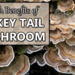 turkey tail mushroom health benefits
