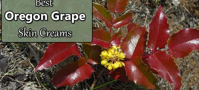 Best Oregon Grape Cream for Skin (Mahonia aquifolium)