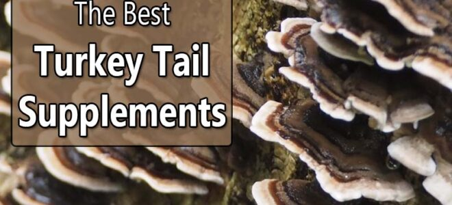 Best Turkey Tail Mushroom Supplements